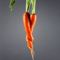 Twin carrots