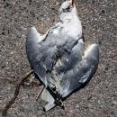 Free Bird, 2012